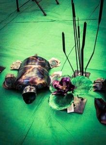 Sea turtles_edited_edited
